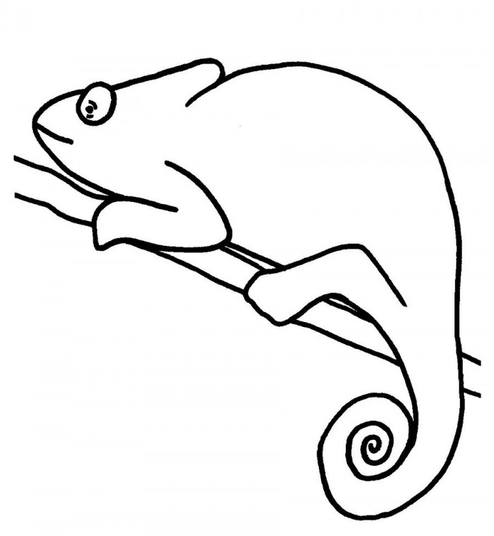 Chameleon Coloring Page Educations 99coloringcom