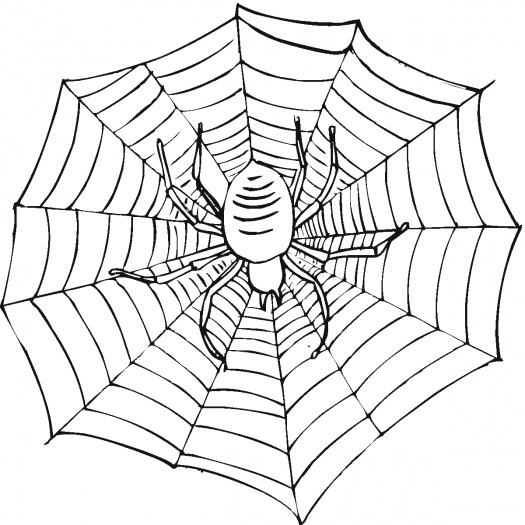 Spinnennetz Malen Az Ausmalbilder