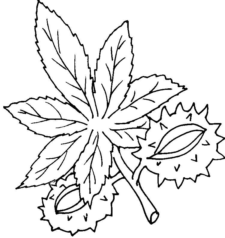 Herbstblätter Zum Ausmalen Az Ausmalbilder