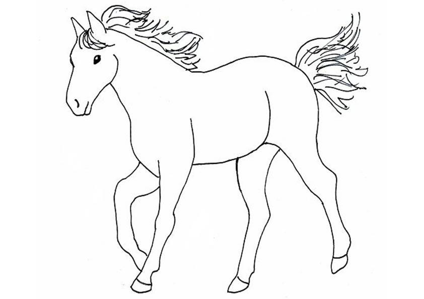 Malvorlage Pferd - AZ Ausmalbilder