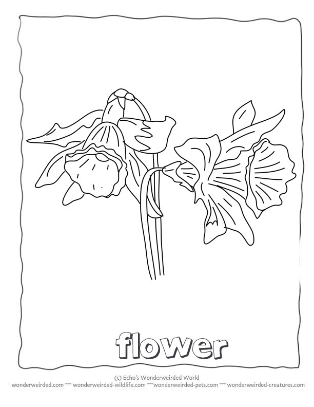 Flower Coloring Sheets Daffodils,Free Printable Flower Coloring - AZ ...