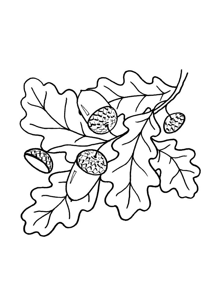 Ausmalbilder Blätter - AZ Ausmalbilder