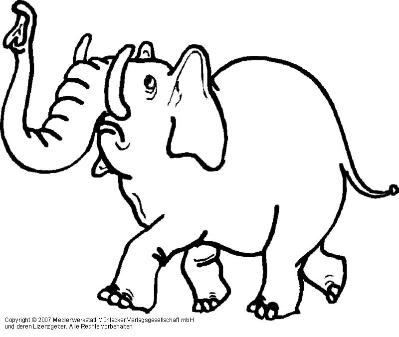 elefant zum ausmalen  newtemp