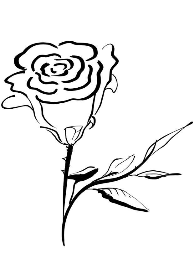 Ausmalbild Rose - AZ Ausmalbilder
