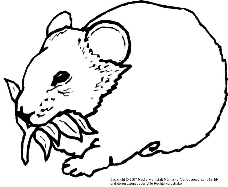 Hamster Bilder Zum Ausdrucken - AZ Ausmalbilder