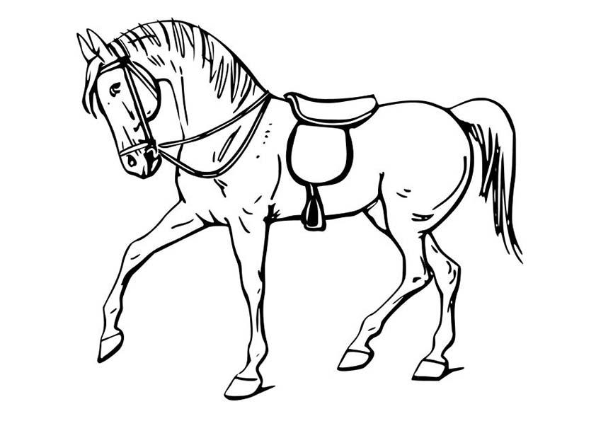 Ausmalbilder Pferd Az Ausmalbilder