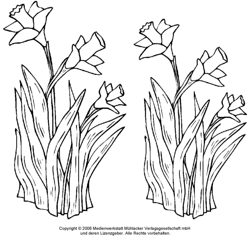 Ausmalbilder Frühblüher Az Ausmalbilder