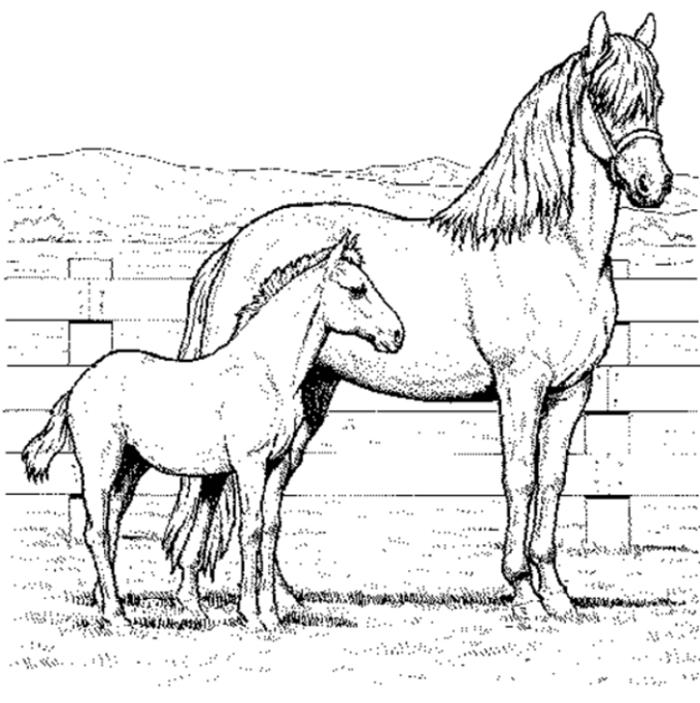Ausmalbild Pferde - AZ Ausmalbilder