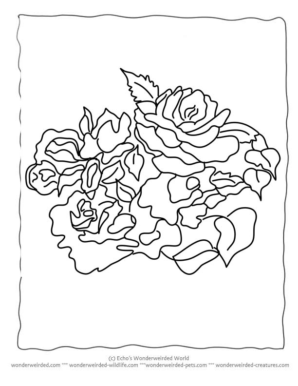 Flower Coloring Sheets rose,Free Printable Flower Coloring Pages