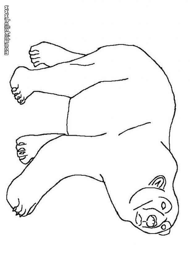 Eisbären Bilder Zum Ausdrucken Az Ausmalbilder